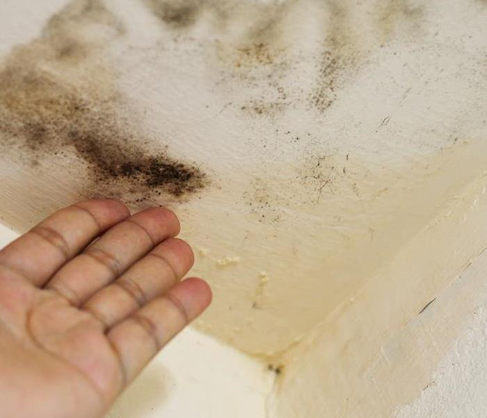 Mold Remediation Black Mold and Why It Shows Up in Homes